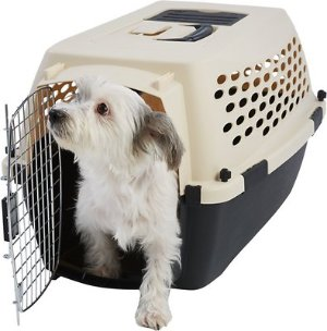 Frisco Plastic Kennel, Almond & Black, Small - Chewy.com