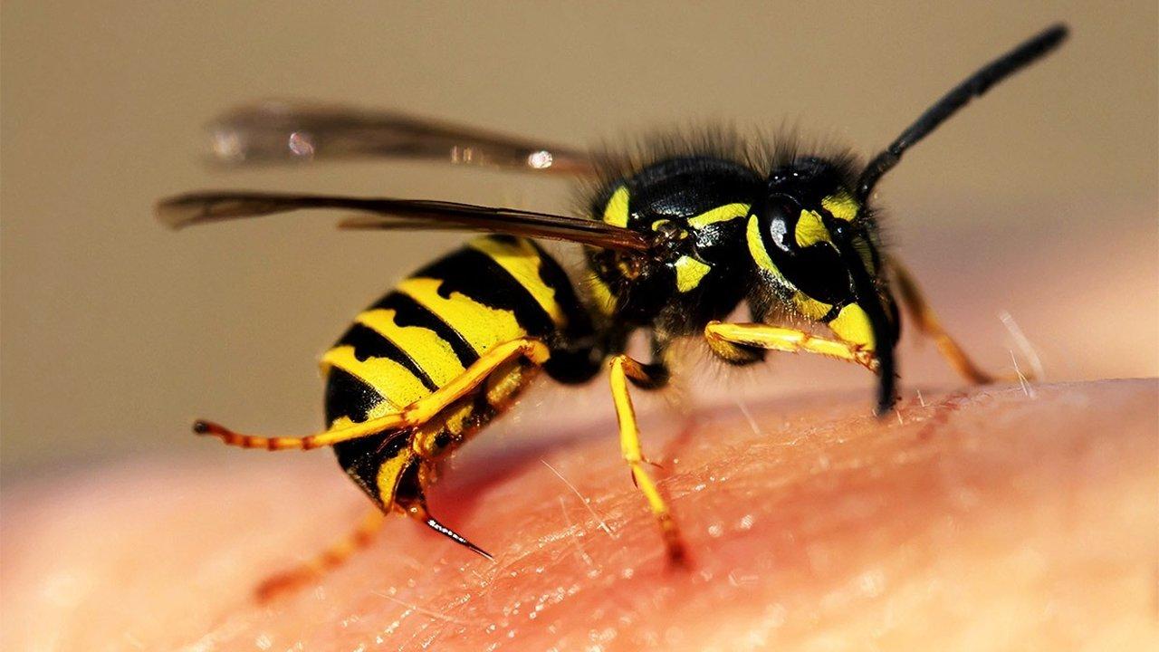 夏天被马蜂蛰了怎么办?如何快速区别马蜂和蜜蜂?| 生活小常识系列