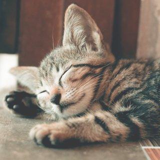 低至6折 + 额外8折Petco 精选猫咪床促销热卖