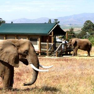 低至$186/晚  大象为你送早餐加州蒙特雷湾 Vision Quest Ranch 野生动物农场别墅