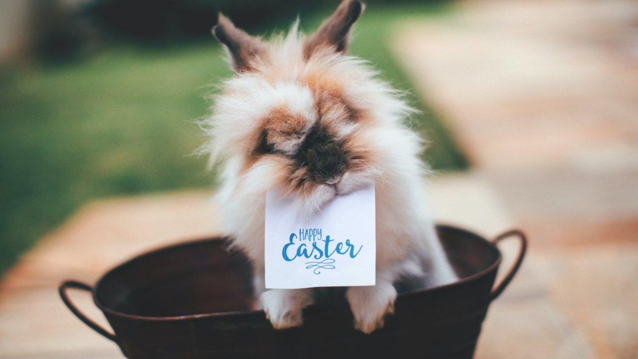 Easter复活节2021   英国复活节假期是什么时候?英国复活节活动/美食全盘点
