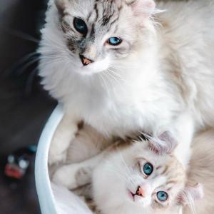 Petco 精选猫咪床促销热卖