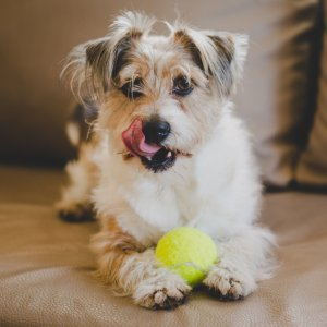 Up to 40% OffPetco Selected Dog Toys on Sale