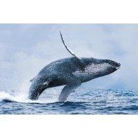 观赏鲸鱼之旅 雷克雅未克出发