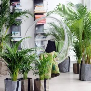 3.4折仅€19.99 变身天然氧吧绿植盆栽4件套限时热促 收棕榈树、香蕉树、咖啡树、槟榔树