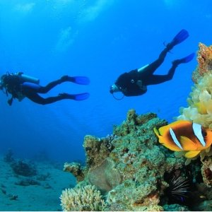From $196Scuba PADI Certification Training Course at Orange County Scuba Center