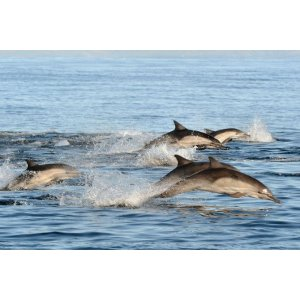 Aviator NationPort Stephens 海豚观赏 Dolphin Watching, Sandboarding, and Australian Wildlife