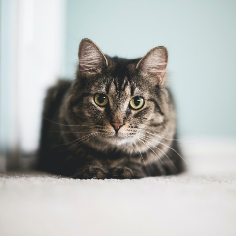 Up to 25% OffPetco Cat Grooming Supplies on Sale