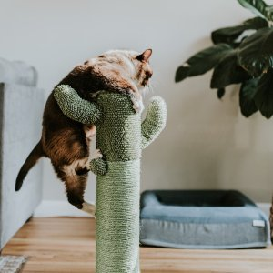 8.6折起 低至€21.95可收Amazon 猫爬架超多选择 主子的爬高、磨爪等需求一次性满足