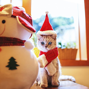 PETLESO 猫咪圣诞帽+围脖 小型犬也能用