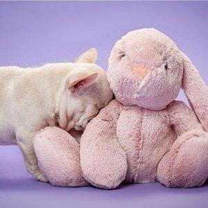 超多选择 小兔 小狗 小熊£7起娃娃大作战 超多娃娃任你选 哄女朋友神器 一个不够就两个