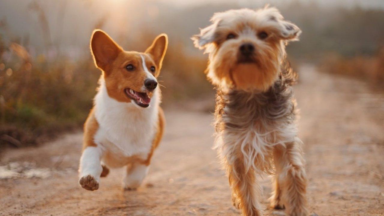 宠物用品狗狗篇 | 吃喝拉撒生活出行所需要的好物推荐!