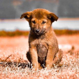 现在报名享$40礼卡Petco 提供幼犬训练课程 平均每周$20
