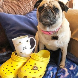 As Low As $20Crocs Fall Style Shoes Sale