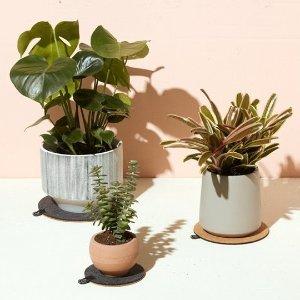 限时8.5折 $15.3收薰衣草最后一天:Modern Sprout 室内植物盆栽 清新装饰点亮心情