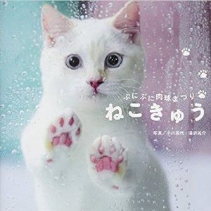 As Low As $8.39Amazon Japan Kitty Photobooks