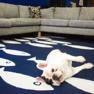 低至3折Wayfair 精选装饰地毯大促