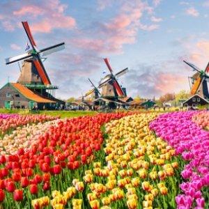 往返$360起 郁金香与风车的国度荷兰阿姆斯特丹往返机票大促 美国多地出发