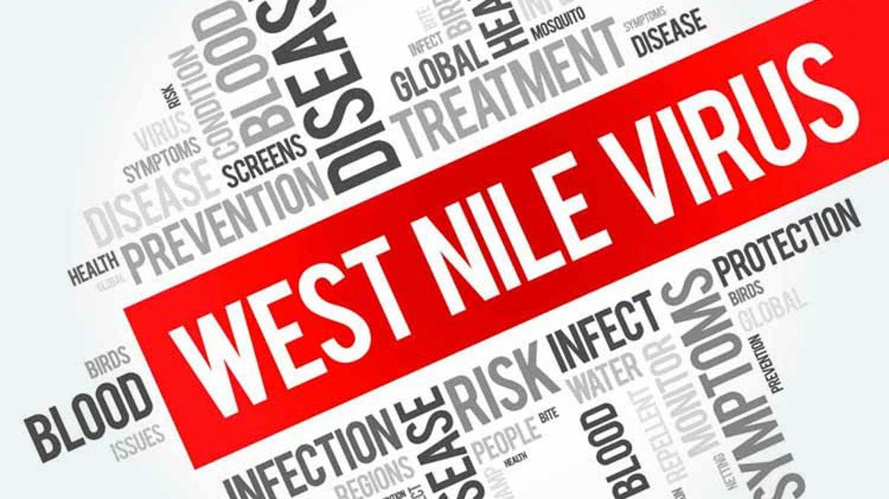 美国发现今年首例人类西尼罗河病毒,哪些人容易招蚊子?蚊子叮咬会传播哪些疾病?防止蚊虫叮咬的知识你必须知道!