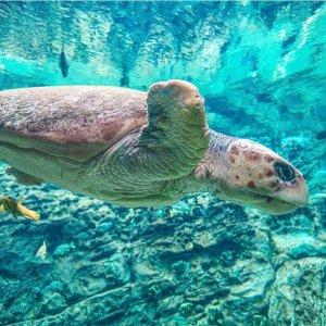 低至5.5折SeaWorld Orlando 奥兰多海洋世界门票大促 春天出游可选
