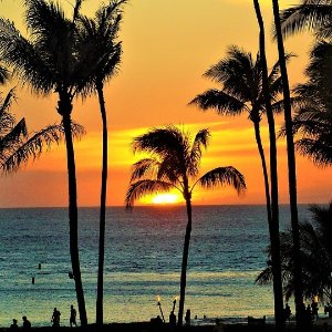 From $334Houston To Honolulu RT