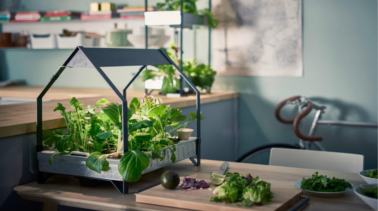 北美后院种菜攻略 | 零基础打造吃货的梦想菜园