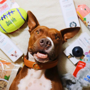 Up to 50% OffPetco Dog Birthday Party Supplies on Sale