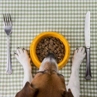 专业捡屎官的选购心得宠物知多少 狗粮大玄机