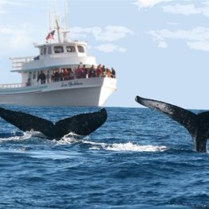From  $37.5Whale Watching at Sea Goddess Whale Watching