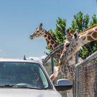 新泽西 野生动物园自驾游 单人票