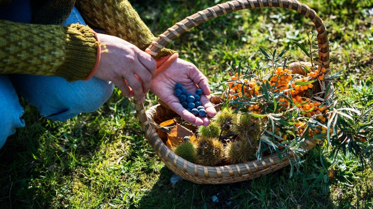 Foraging 101 | 秋季适合新手采摘的8种野生美食
