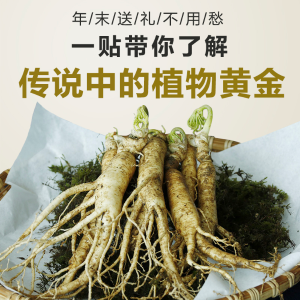 A Magic Cure All What is American Ginseng