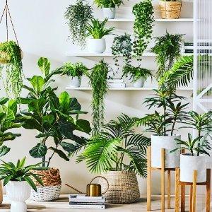 7折起 75cm绿植盆栽仅$35Adairs 绿植、盆栽、脏衣篓本周特惠 给家增添绿意