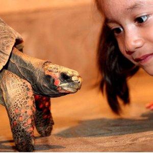 儿童免费 低至7.1折 $12 (原价$17)Reptilia加拿大最大室内爬行馆 多伦多遛娃好去处 寓教于乐