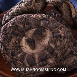 15% off MUSHROOM new season sale @ Mushroomsking