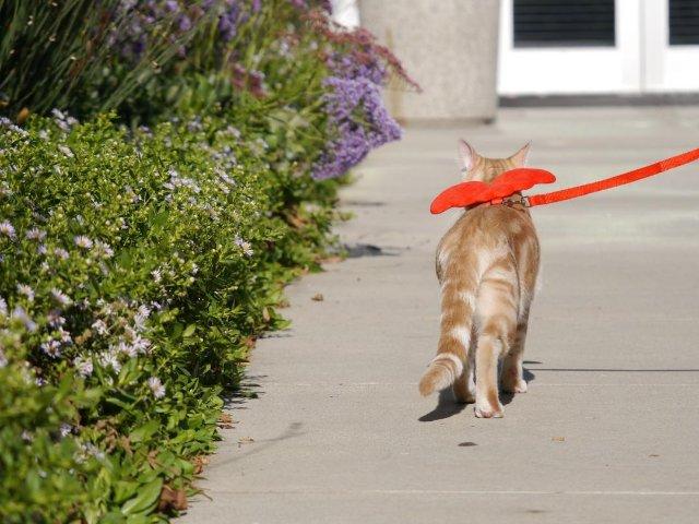 室内猫总往外跑,总想溜出门,怎么办?
