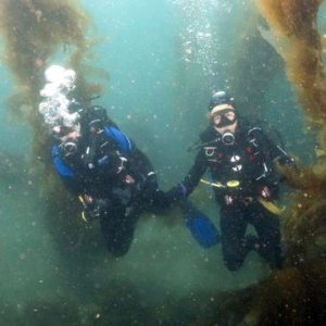 As low as $36Los Angeles Scuba Diving Lesson
