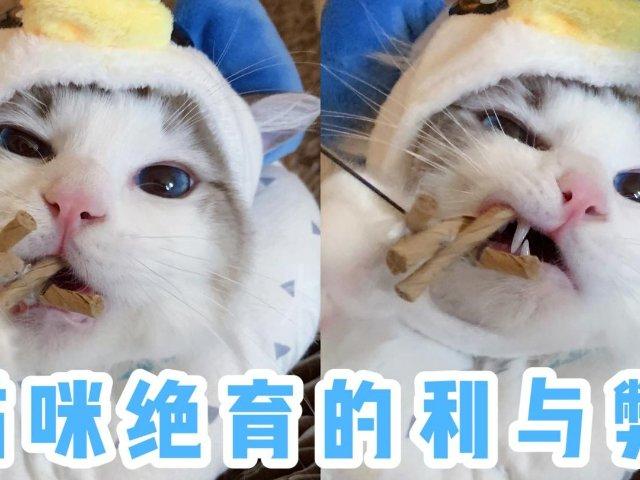 【养猫指南】绝育到底对猫好不好?理...