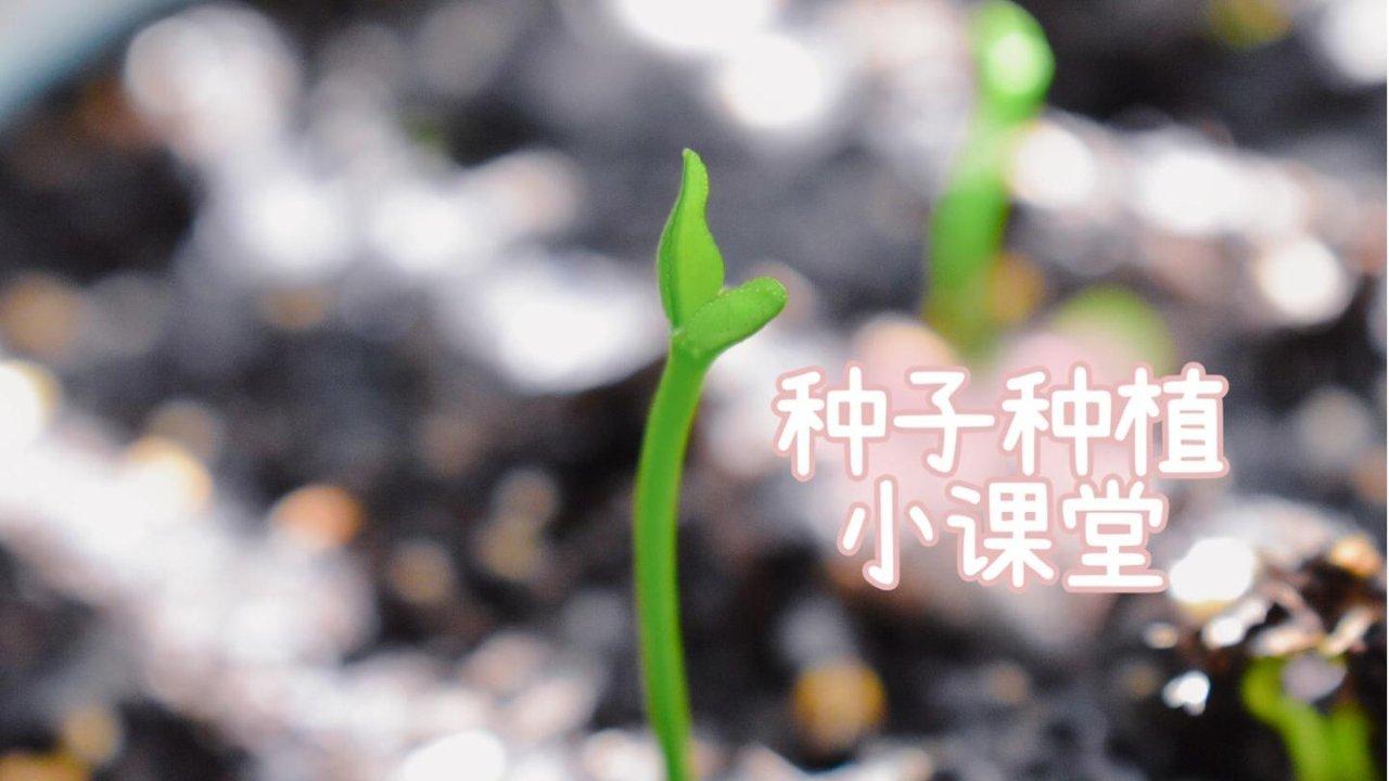 ❤种子种植小课堂,给你超多办公桌小盆栽Ideas❤