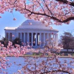 <赏樱季 · 美东3日>【芝加哥往返,华盛顿DC赏樱+匹兹堡+阿米什人村】