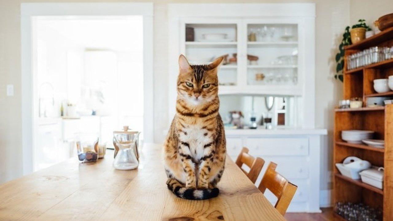 宠物用品猫猫篇 | 喵星人吃喝拉撒睡玩乐好物大推荐!