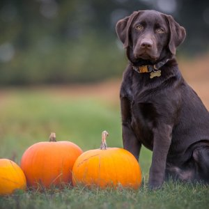 Buy 1 Get 1 50% OffPetco Selected Dog Bootique Halloween Collection on Sale