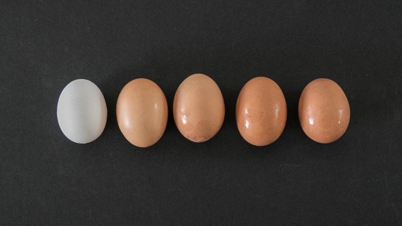 加拿大常见的14 款鸡蛋测评 | 营养成分、等级标准、编码解读,读懂这些再也不交智商税!