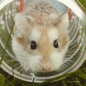 低至7折 + 额外8折Petco 精选小型动物笼子促销热卖