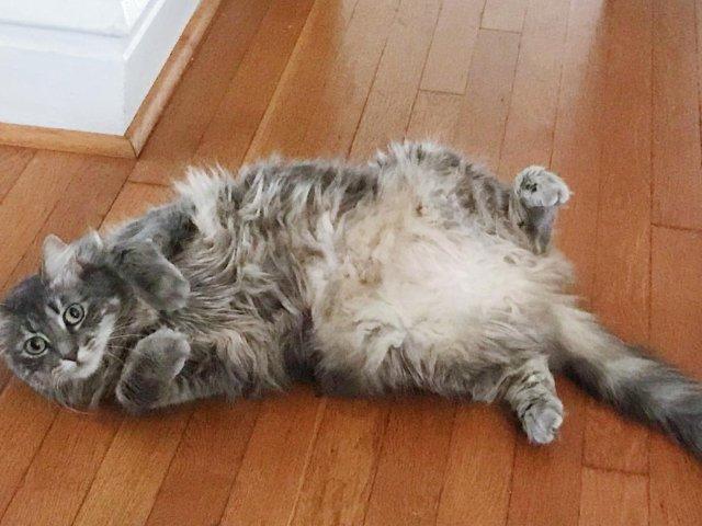 养一只猫的快乐(与忧伤