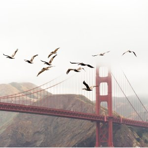 From $117Seattle To San Francisco RT Airfare