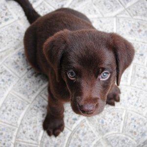 带你家的小狗来交新朋友吧Petco 每周六、周日下午1点,免费小狗交友活动