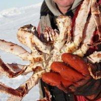 <阿拉斯加追极光必选1日>【小木屋冰湖钓鱼】含海鲜烧烤+接送,全程4小时 编号:4686