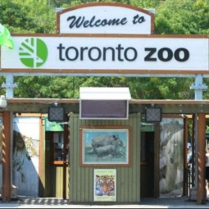 儿童免门票Toronto Zoo 多伦多动物园万圣节特惠