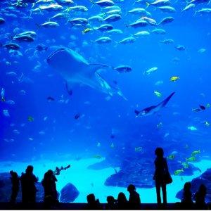 4月1日-4月30日多伦多水族馆 (Ripley's Aquarium of Canada) 大学生享7.5折